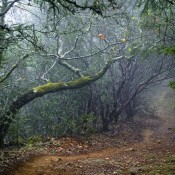 hidden-treasures-napa-trail