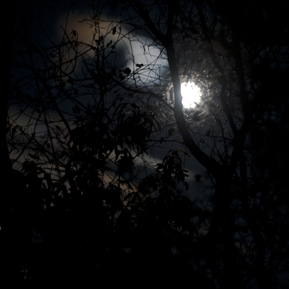 nocturnal-branches-and-moon-1