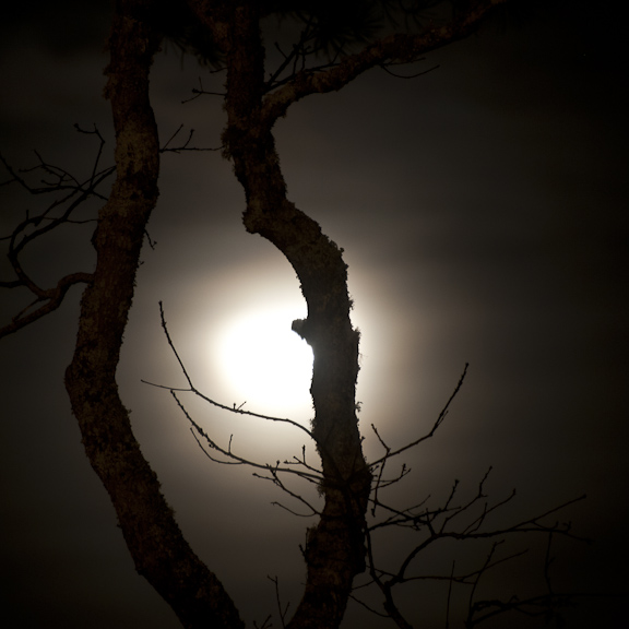 nocturnal-tree-and-moon