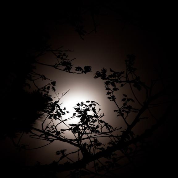 nocturnal-backlit-branches