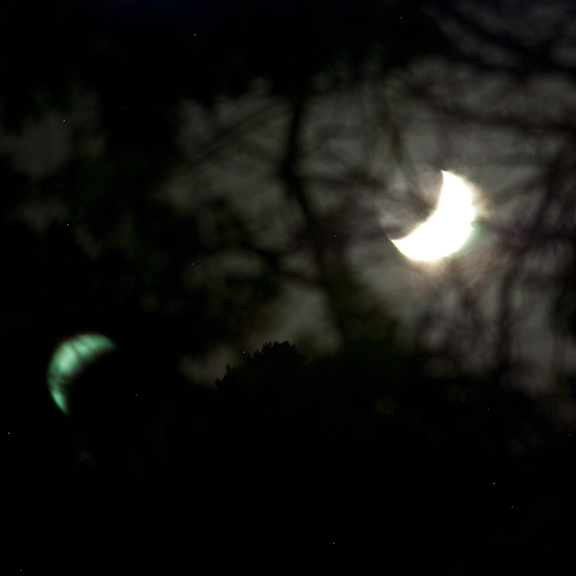 nocturnal-branches-and-moon-2