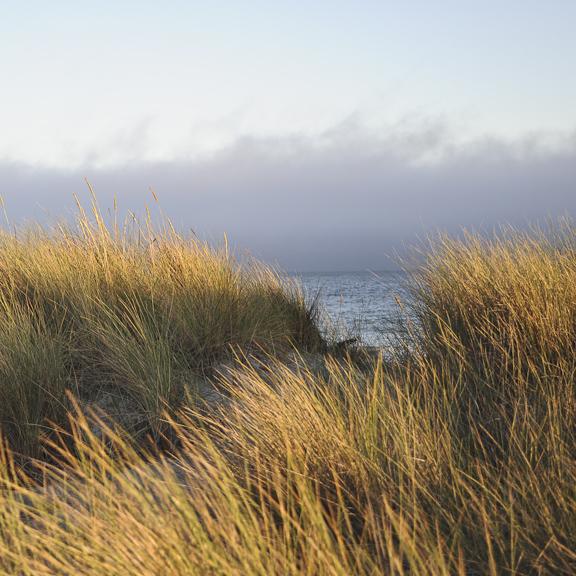 water-vineyard-dunes